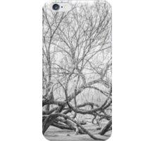 Nature: Fallen Tree iPhone Case/Skin