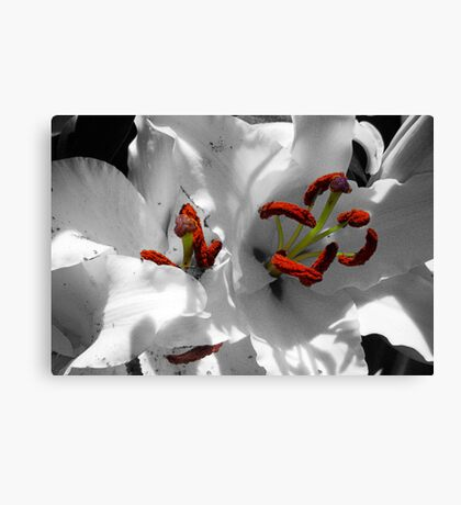 The Mysterious Lily Canvas Print