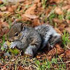 Baby Squirrel 002 by JulesPi