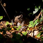 Baby Squirrel 003 by JulesPi