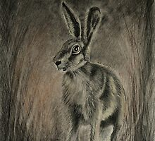 Midnight  Hare by Lynn Hughes