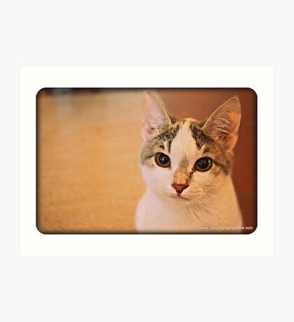 Pebbles the  dustbin cat Art Print