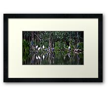 Blue Herons And White Egrets Framed Print