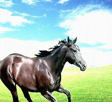 Free Running Horse by Abie Davis