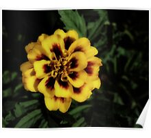Yellow Flower Dark Effect Poster