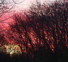 Burning Sun, Brilliant Sky by daphsam