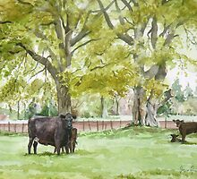 Aberdeen Angus Cattle by Joyce Grubb