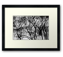 Black and White Silhouetted Trees  Framed Print