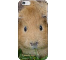 Ginger Guinea Pig iPhone Case/Skin