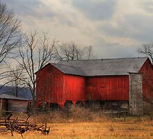 Tin Roof by Sharon Batdorf