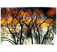 Colorful Silhouetted Trees 10 Poster