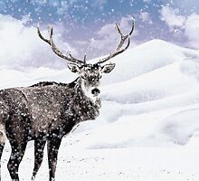 Winter Stag - A Reindeer by Abie Davis