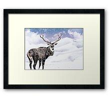 Winter Stag - A Reindeer Framed Print