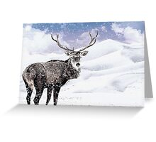Winter Stag - A Reindeer Greeting Card
