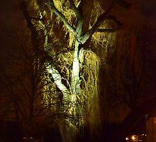 A very old Willow tree lit by Jacqueline van Zetten