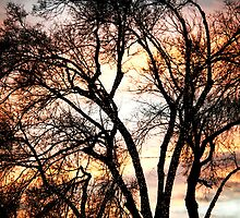 Colorful Silhouetted Trees 11 by Bo Insogna