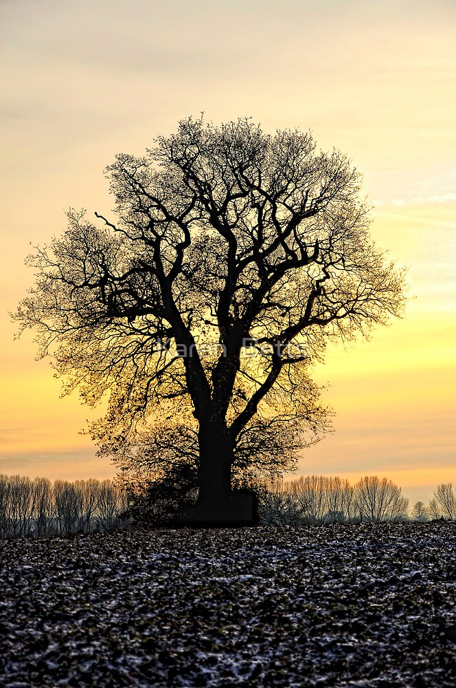 Tree by Karen  Betts
