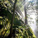 Good Timber, Vernal Falls, Yosemite by James Lady