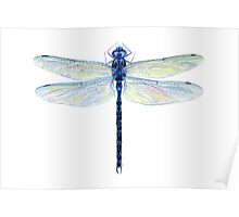 Spatterdock Dragonfly Poster