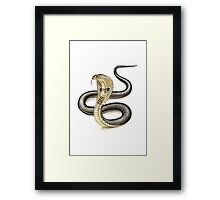 Indian Cobra (Naja naja) Framed Print