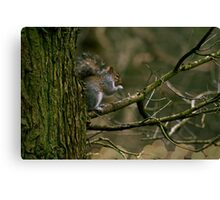 squigel Canvas Print
