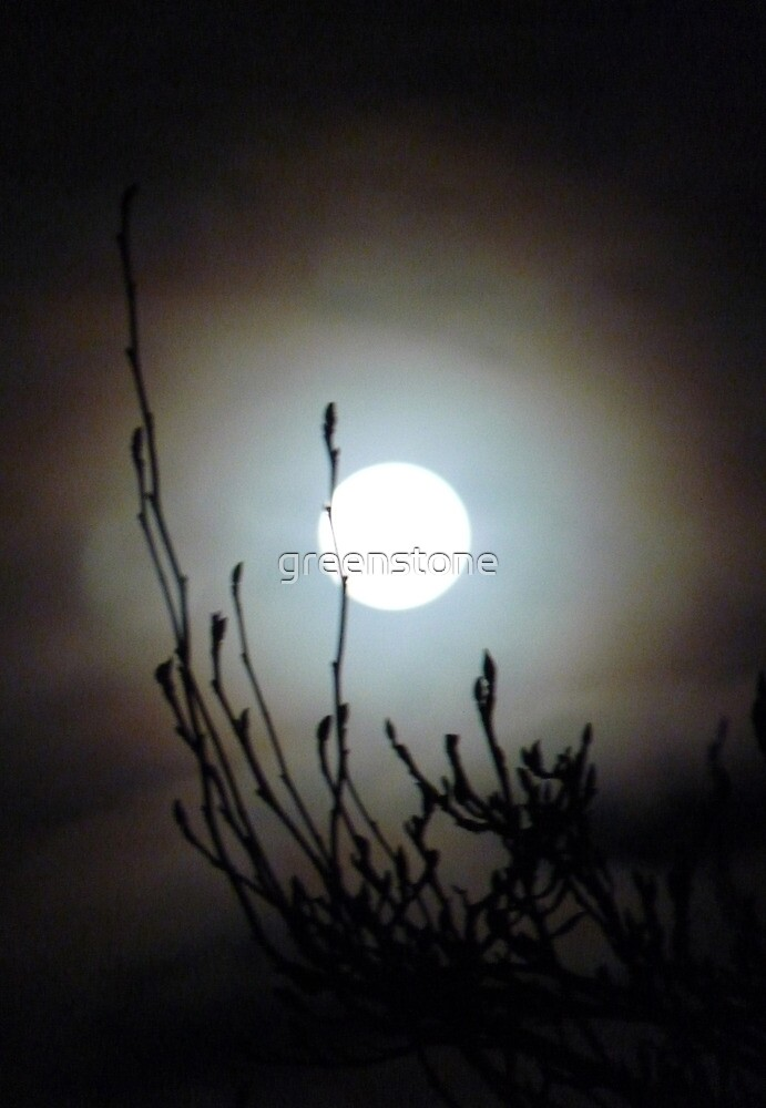 The First Full Moon and The Chinese Witch Hazel. Cornwall 2012. by greenstone