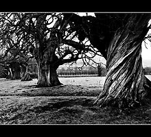 Twisted trunk by robsta5