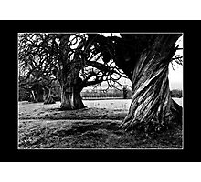 Twisted trunk Photographic Print