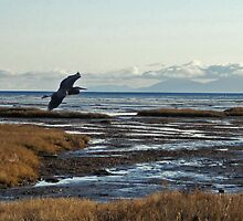 Great Blue Heron by Lesliebc