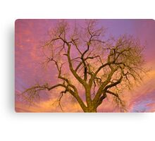 Colorful Cottonwood Pastel Sunset Canvas Print