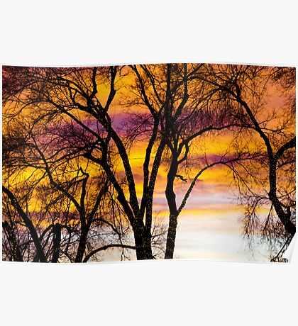 Colorful Silhouetted Trees 19 Poster