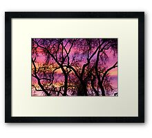 Colorful Silhouetted Trees 21 Framed Print