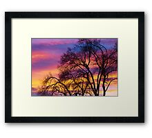 Colorful Silhouetted Trees 25 Framed Print