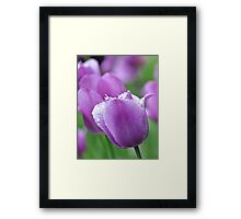 essence of purple Framed Print