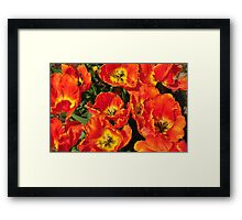 Bursting Orange Framed Print