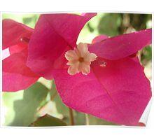 Jamaica-flower 2 Poster