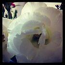 White by Marita
