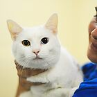 White Cat by ppcpetphotos