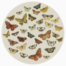 Fluttering Vintage Butterflies by gingerkelly