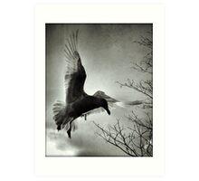 avian 67 Art Print