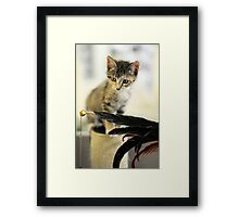Playing Kitten Framed Print