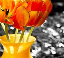 Tulips in a Vase by korymatu