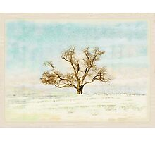 The One Tree Photographic Print