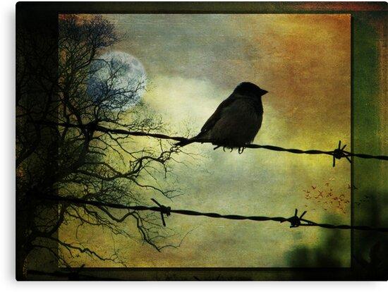 Bird on a wire by MarieG