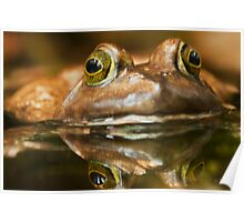 Kiss  the Frog and Free the Prince  Poster
