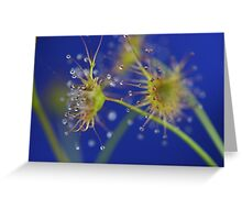 D'Rosera in Blue Greeting Card