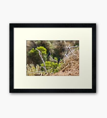 Two welcome swallows perched on a branch Framed Print