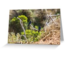 Two welcome swallows perched on a branch Greeting Card