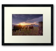 Whats Up Doc? Framed Print