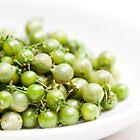 Coriander Berries by Hege Nolan